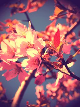 Spring all the way by DarlingBeatrice