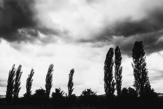Cypresses are like feathers in the wind by everypathtonowhere
