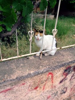 Stray Cat of Athens by sotiraras55