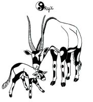 Oryx Beisa and calf by Faelyne