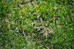 Where the grass is green by maxiaringoli