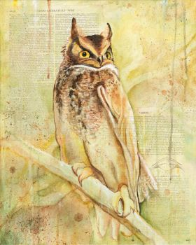 The Owls Are Not What They Seem (II) by bedowynn