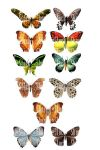 Butterfly Stock - Flat View by Shoofly-Stock