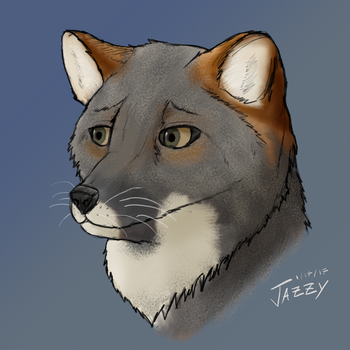 Darwin's Fox by woundedkneecap