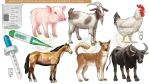 DepEd LR: Animals and Household items #3 by artistmyx