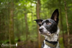 A moment to ponder by ShelleyVPhoto