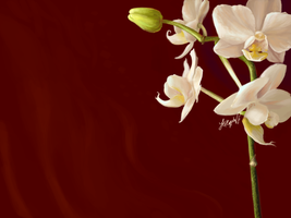 Daily Doodle Orchid Wallpaper by mynti