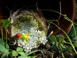 Nesting in a Flower Pot by Zilch17