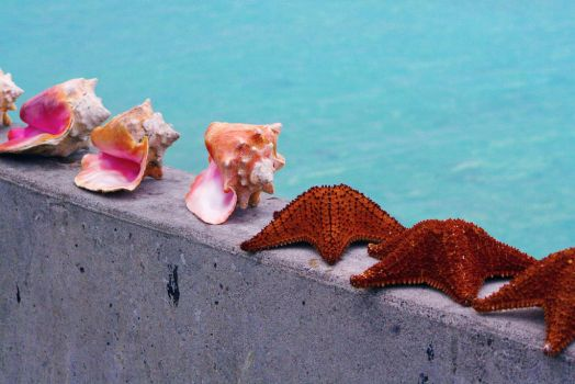 Conch shells and starfish I by cypherstock