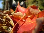 Leaves in the Fall by olivia808