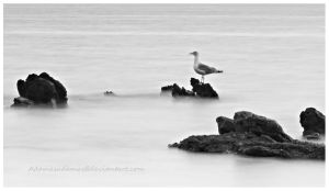 Seagull - long exposure by PanosPS