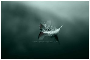 Softly by Malleni