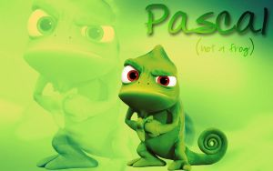 Pascal by kg1507