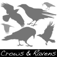 Crows and Ravens by CrystalSoul5