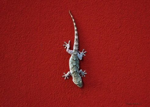 Gecko by Krial6