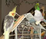 Vinnie and the Budgies by Windthin