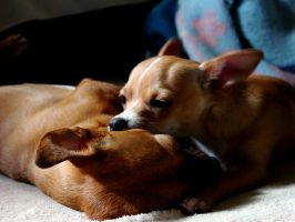 Two Dogs by Catronos
