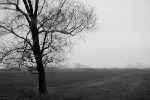 Tree in Motion by Lexie613
