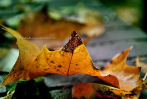 And Summer fades to Autumn by eschlehahn