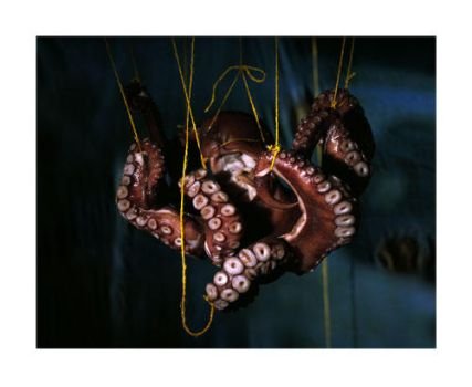 pictoral-filangicalaquaoctopus by crystilizing