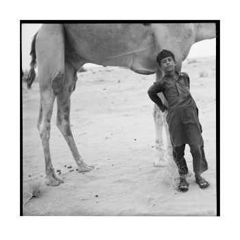 Young camel owner by vehrlich