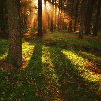 Dream the woods Awake by Oer-Wout