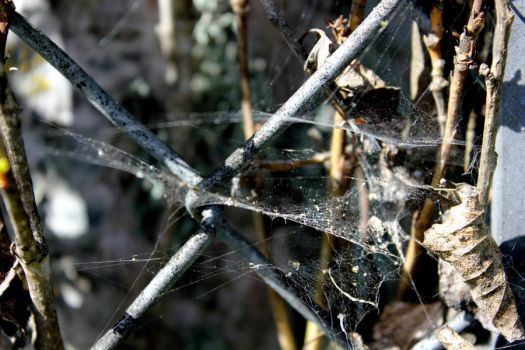 Fences and Webs (2) by anathematix