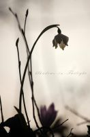 silhouette of spring by Shadows-in-Twilight
