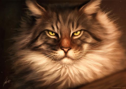 Maine Coon by Lhuin