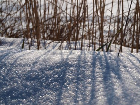 Snow Light II by Steppenblume