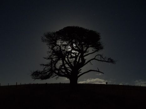 One tree hill...nocturne by 2BSued