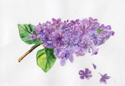 branch of lilac by 8Libelle8