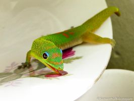 Gold dust day gecko 9 by kitty974