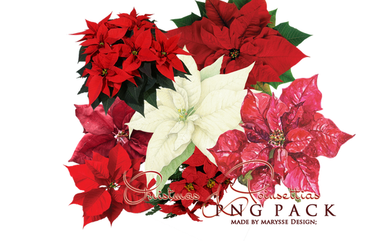 Poinsettia PNG Christmas Pack by Marysse93