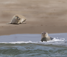 Seals by niveky