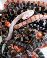 Baby snakes by cathy001
