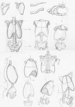 Random anatomy sketches 2 by RV1994
