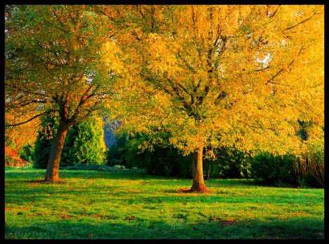 Leaves of gold by elanordh