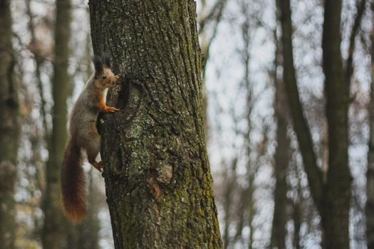 Squirrel by TeTeSHeCHKa
