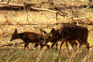 Stock: Deer in Zion by Celem