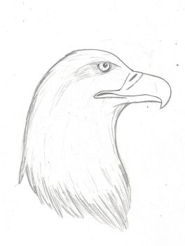 eagle pic in honor of 9/11 by jesslyoko324