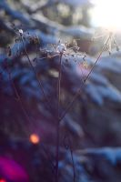 Lensflare by lordschaft