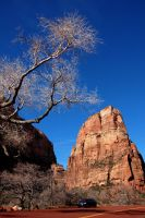Zion National Park III by esee