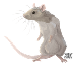 Chinese Zodiac Contest: Rat by Penny-Dragon