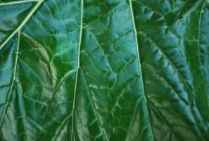 Leaf Close Up by ReSaturate