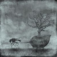the fly by anapt