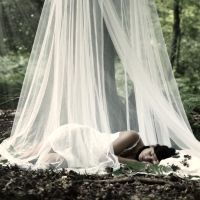 once in a forrest by photoflake