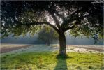 Apple Tree Shadows by Philippe-Albanel