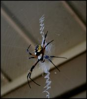 Super Spider by lamsquaw