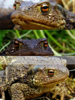 Prince Charming aka Toad Stock by SilaynneStock